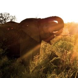 L'AFRIQUE DU SUD  /  SOUTH AFRICA
